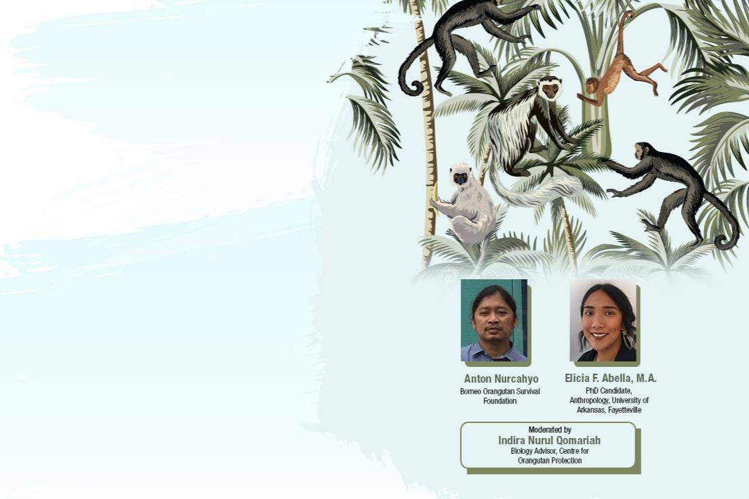 Wildlife Series: Our Primate Friends!